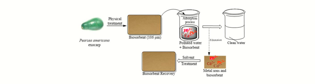Removal of Aqueous Lead and Cadmium using Persea americana Seed Coat: Single and Binary Studies