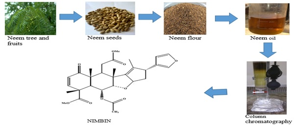 Anti-Bacterial, Anti-Oxidant and Cytotoxic Activities of Nimbin Isolated from African Azadirachta Indica Seed Oil